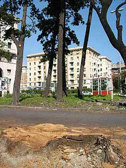 albero tagliato