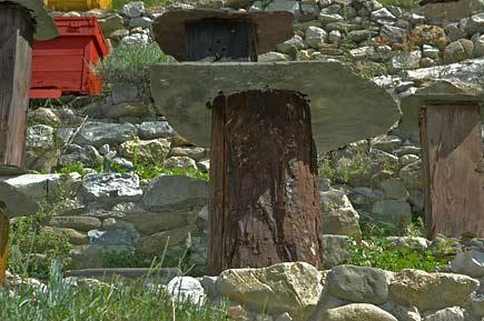 Uno sciame dentro un tronco d'albero cavo