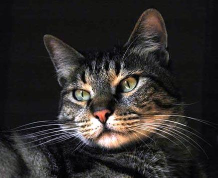 Tigre, il mio gatto