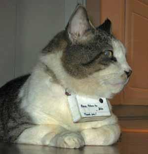 gatto con telecamera al collo