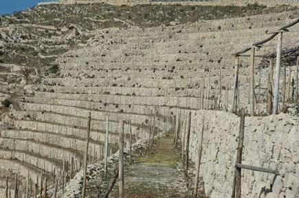 fasce in Liguria