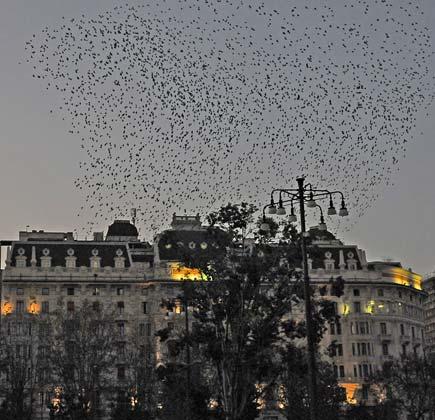 uccelli gallia milano